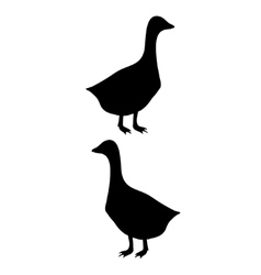 goose silhouette vector image vector image