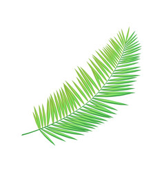 areca palm leaf icon closeup vector image