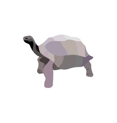 cartoon turtle isolated on white background vector image