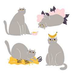 Cute british shorthair cat collection 3 vector