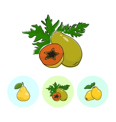 Fruit Icons Papaya Pear Quince vector
