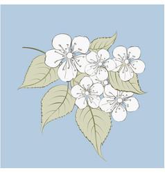sakura flowers elements vector image vector image