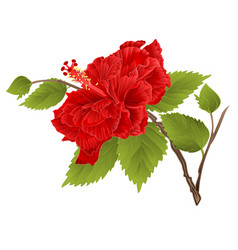 stem red hibiscus tropical flower vector image