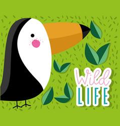 Cute tucan wildlife bird vector