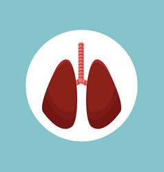 lungs organ human image vector image