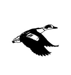 Duck-Flying-380x400 vector image vector image