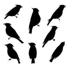 set of birds silhouettes vector image vector image
