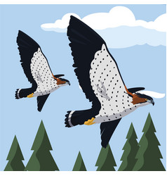 Beautiful hawks flying majestic birds vector