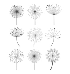 Black and white dandelions set vector