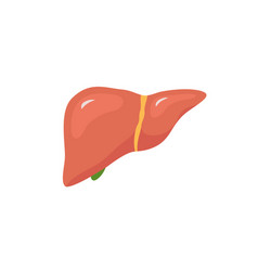 Liver icon flat logo human disease health vector