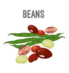 Organic natural beans of all species with high vector