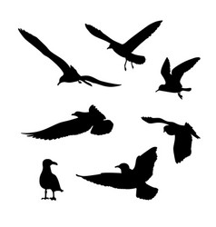 Set of seagulls silhouettes vector