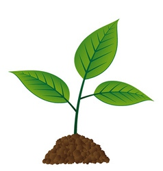 young tree vector image
