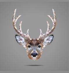 Deer low poly portrait vector image