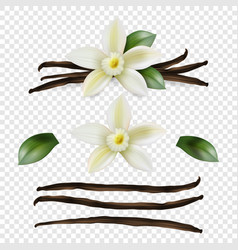3d realistic sweet scented fresh vanilla vector