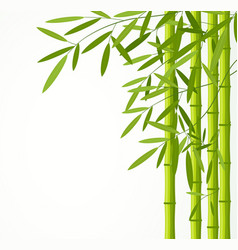 green bamboo stems with leaves vector image