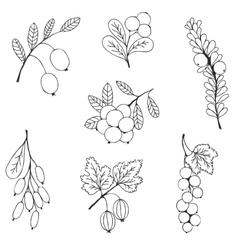 Berries sketch seamless pattern vector