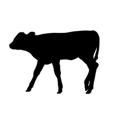 calf silhouette vector image