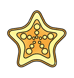 Starfish tropical summer icon vector