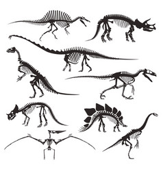 prehistoric animals bones dinosaur skeletons vector image