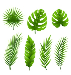 Tropical palm tree leaves collection vector