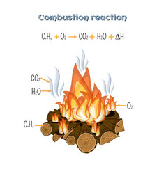 combustion reaction - wood burning at fire camp vector image vector image