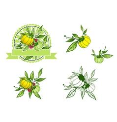 Exotic Fruit Garcinia Cambogia Collection Set vector image vector image