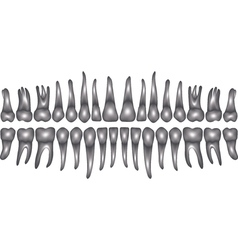 3d dentition vector image