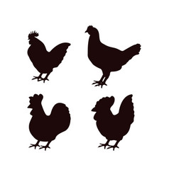 Chicken icon design template isolated vector