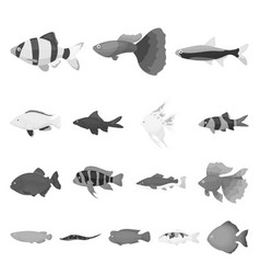 different types of fish monochrome icons in set vector image