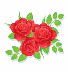 red roses vector image