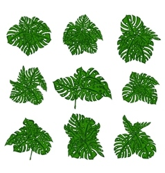 The collection of tropical wild bushes of fern to vector