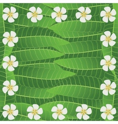 Ornament Of Frangipani Flowers And Leaves vector image