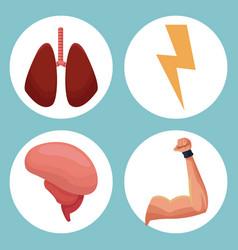 set organs human healthy image vector image