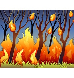 Trees in forest on fire vector image vector image