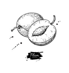 plum drawing hand drawn fruit and sliced vector image