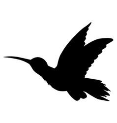 Tropical bird hummingbird vector