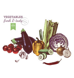 hand drawn vegetables border vector image