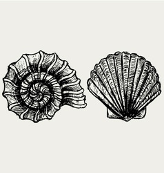 Sea snail and scallop shell vector image vector image
