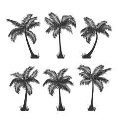 Coconut palm trees silhouette set on white vector