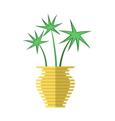 cyperus papyrus in yellow vase vector image