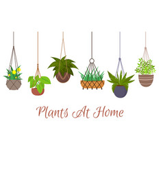 Indoor green plants in pots hanging on decorative vector