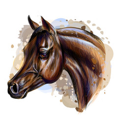 portrait an arab horse graphic color realistic vector image
