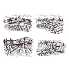 vineyard old france chateau wine landscape hand vector image