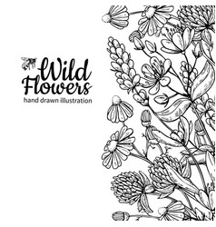 wild flowers drawing set isolated meadow vector image