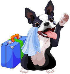 Boston terrier with a suitcase vector