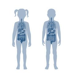 Child internal organs vector