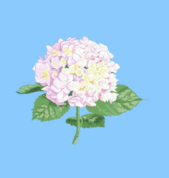 highly detailed of hydrangea vector image