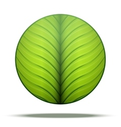 Leaves round Icon vector