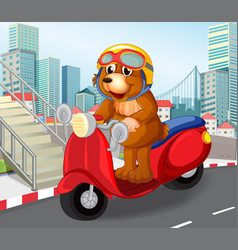 Bear riding scooter in urban town vector